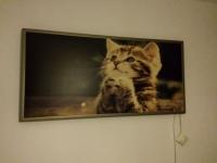 Panou radiant model pisica